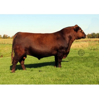 TINH BÒ THỊT RED ANGUS - RED SIX MILE GRAND SLAM 130Z
